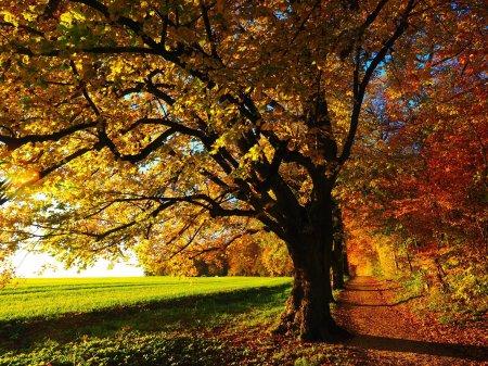 Literature. Writing. Blogging. Autumn.